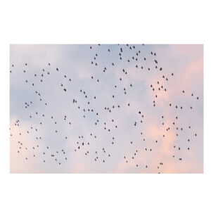 Fine Art Photo Print of Birds and Sunset