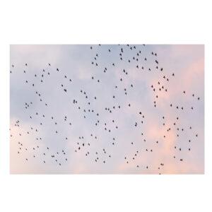 Fine Art Photo Print of Birds and Sunset